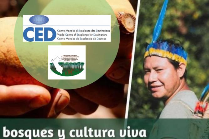 CED - ANECAP Perú